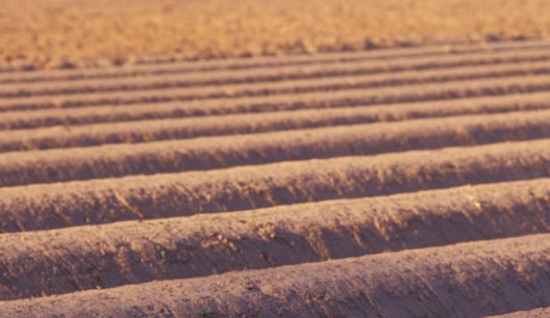 Bild von Erdboden (Kartoffelanbau)