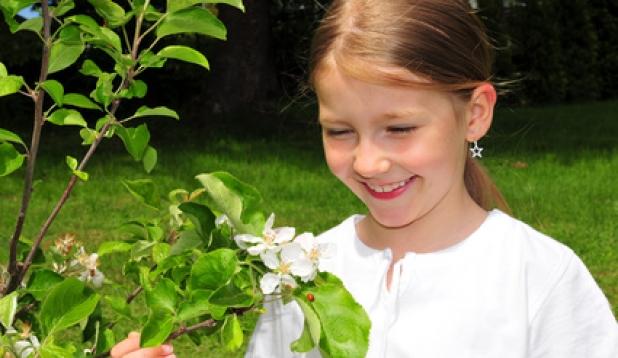 Kind mit Apfelblüte