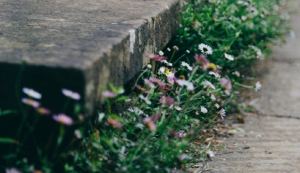 Treppe mit Gänseblümchen