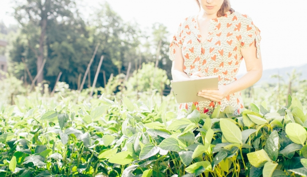 Feldforschung für den Anbau heimischen Bio-Sojas