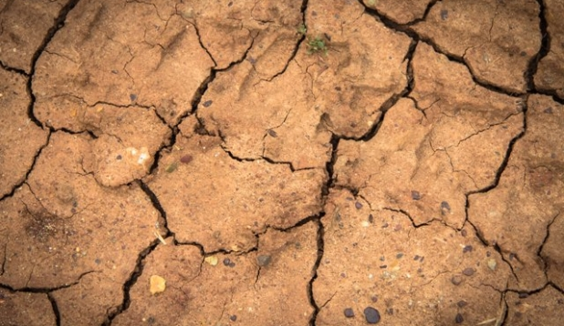 Dürrerisse im Acker