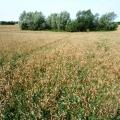 Ökologische Landwirtschaft in Mecklenburg-Vorpommern
