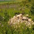 Steinhaufen mit Eidechsen, Blumenwiesen mit Wildbienen und Schmetterlinge
